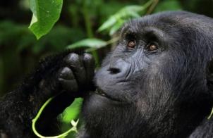 3-days-gorilla-tour